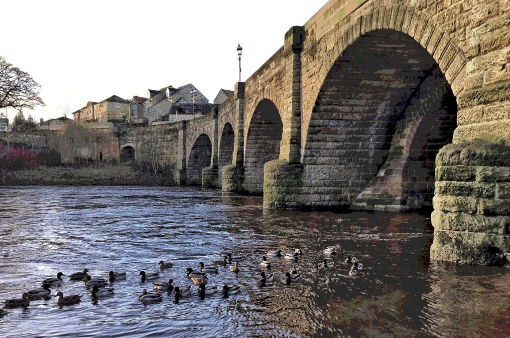 Picture of the arches of wetherby bridge with ducks