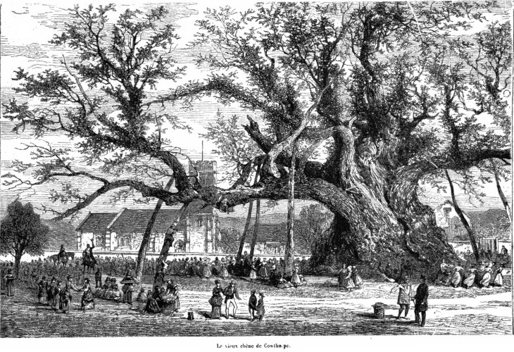 'Compared with this, all other trees are children of the forest'  Dr Hunter, Evelyn's Sylva 1776 (Image 1872)
