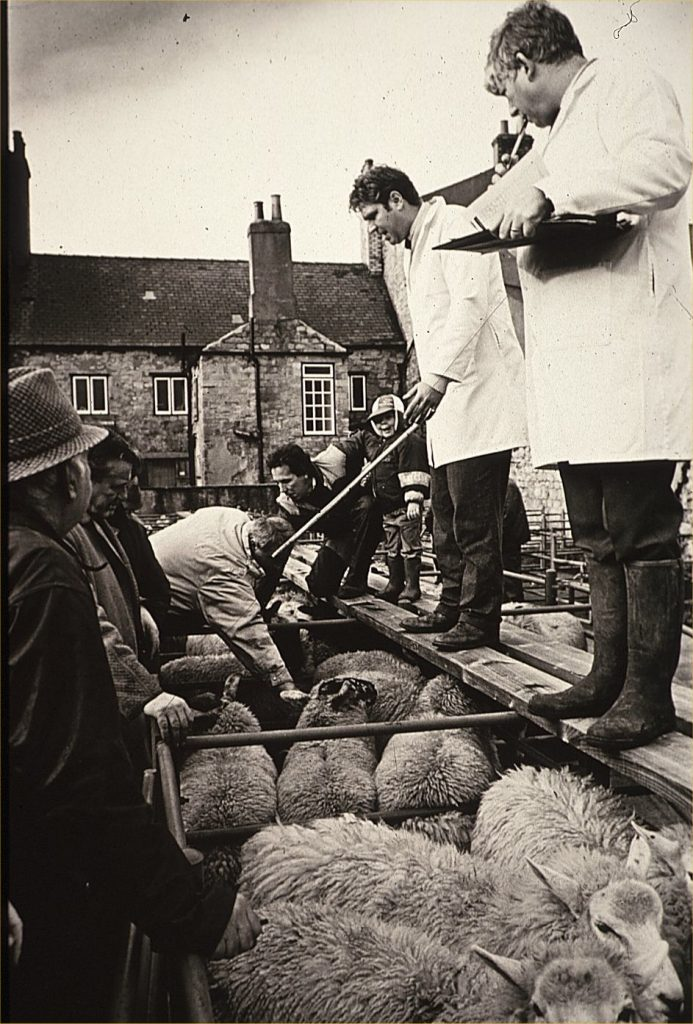 Photo of Cattle Market in progress with auctioneers Richard Waring and Peter Ziegler in the foreground