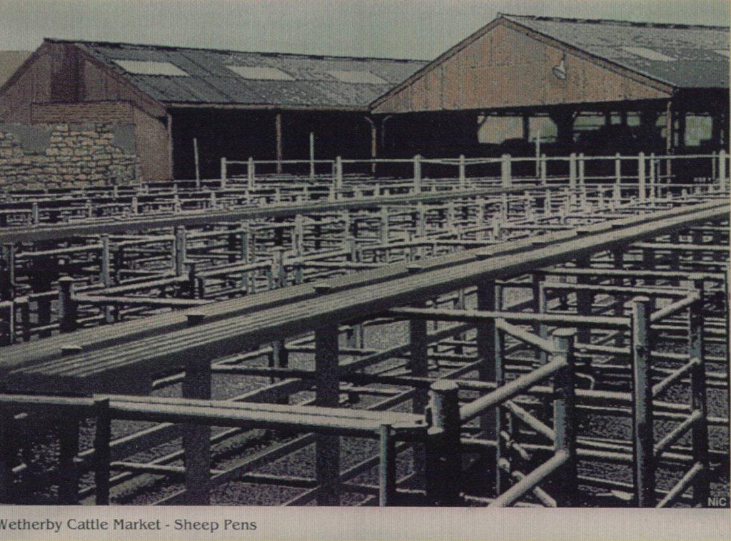 Cattle Market Sheep Pens